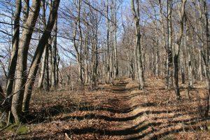 Wanderweg am Albtrauf