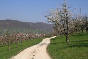 Kirschenweg Dettingen