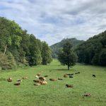 Wandern - Natur - Schwäbische Alb - 18