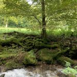 Wandern - Natur - Schwäbische Alb - 02