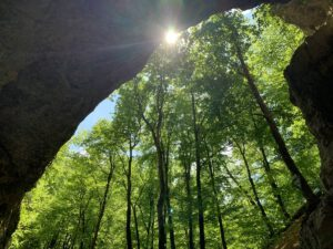 Falkensteiner Höhle 2020