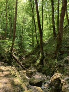 Wanderung Falkensteiner Höhle 2020 1