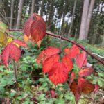 Bad Urach - Herbstimpressionen 02