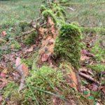 Bad Urach - Herbstimpressionen 11
