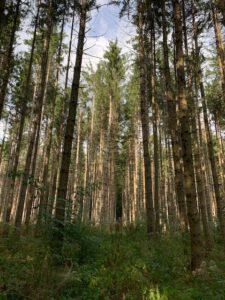Bad Urach - Herbstimpressionen 07