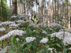 Bad Urach - Herbstimpressionen 06